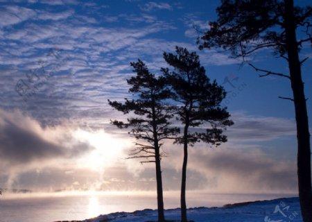 沧桑的大树图片