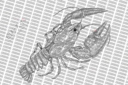 素描龙虾图片