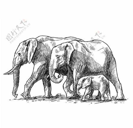 大象矢量图素材图片