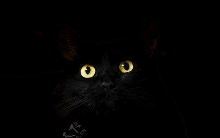 黑色的猫眼睛图片