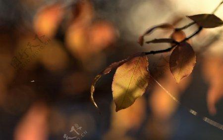 树枝树叶秋天阳光风景图片