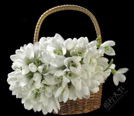 绿植草木花卉素材图片