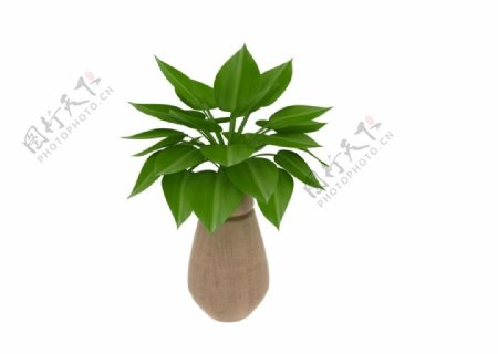 植物盆栽3d模型图片