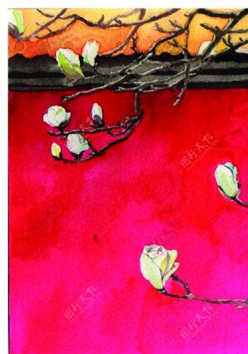 玉兰花背景北京图片