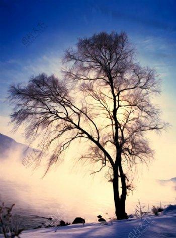 冬树风景油画图片