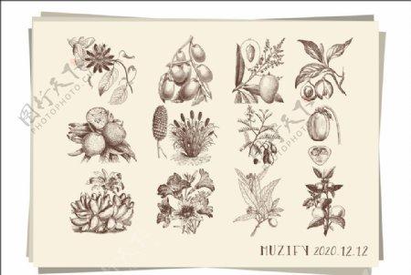 12款入水果素描画图片