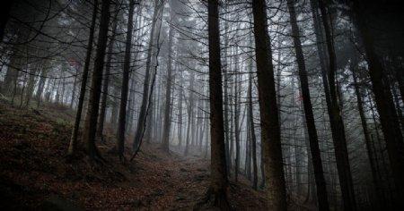 森林树木落叶树枝风景图片