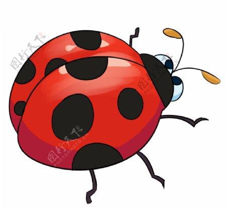 卡通可爱瓢虫图片