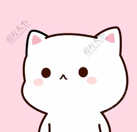 粉色背景白色小猫图片