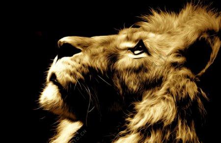 狮子油画图片