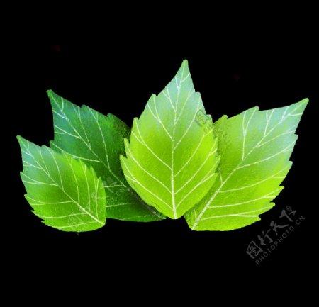 薄荷树叶叶子手绘png图片