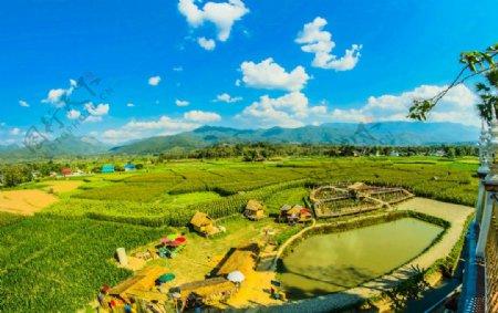 农业的农业亚洲图片