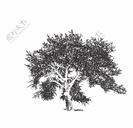 树木铅笔画矢量图图片
